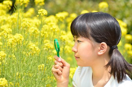 虫眼鏡で花を観察する女の子の写真素材 [FYI02977826]