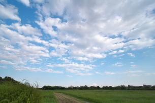 うろこ雲の空の下に広がる草地の写真素材 [FYI02977878]