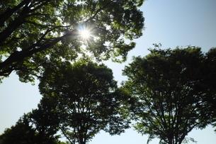 大木の間だから零れる日差しの写真素材 [FYI02977904]