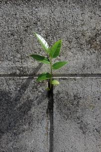 ブロック塀に生えた植物の写真素材 [FYI02978033]