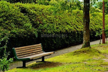 公園 ベンチの写真素材 [FYI02978118]