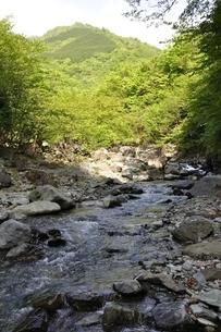 新緑の早戸川の写真素材 [FYI02978144]