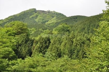 早戸川より丹沢の白馬尾根の写真素材 [FYI02978146]