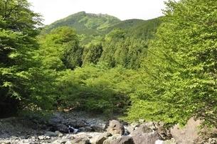 早戸川より丹沢の白馬尾根の写真素材 [FYI02978147]
