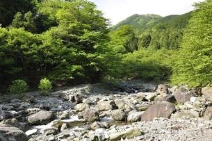 早戸川より丹沢の白馬尾根の写真素材 [FYI02978148]