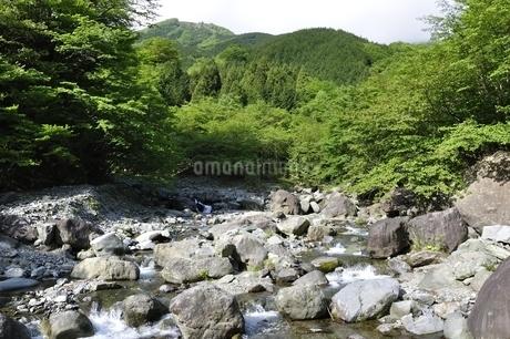 早戸川より丹沢の白馬尾根の写真素材 [FYI02978150]