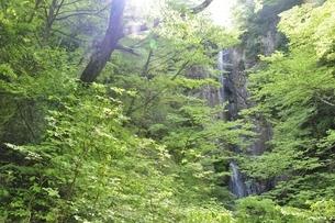 新緑の早戸大滝の写真素材 [FYI02978161]