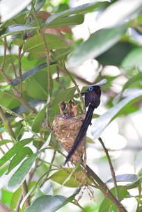 宮古島/繁殖の季節の写真素材 [FYI02978238]