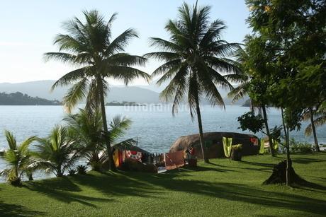 リオ州アラウージョ島に茂るヤシの木の写真素材 [FYI02978245]