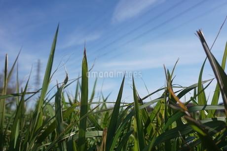 草原の写真素材 [FYI02978292]