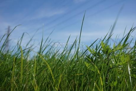 草原の写真素材 [FYI02978294]