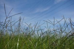 草原の写真素材 [FYI02978295]