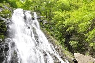 丹沢山地 雷滝の写真素材 [FYI02978525]