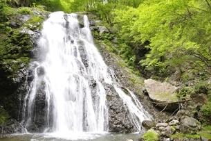丹沢山地 雷滝の写真素材 [FYI02978545]