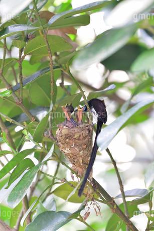 宮古島/繁殖の季節の写真素材 [FYI02978742]