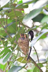 宮古島/繁殖の季節の写真素材 [FYI02978744]