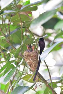 宮古島/繁殖の季節の写真素材 [FYI02978745]