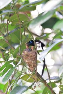 宮古島/繁殖の季節の写真素材 [FYI02978753]