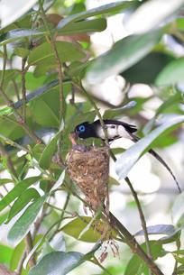 宮古島/繁殖の季節の写真素材 [FYI02978755]