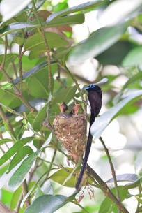 宮古島/繁殖の季節の写真素材 [FYI02978822]