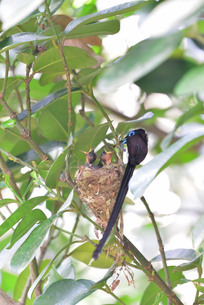 宮古島/繁殖の季節の写真素材 [FYI02978825]