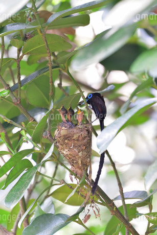 宮古島/繁殖の季節の写真素材 [FYI02978830]