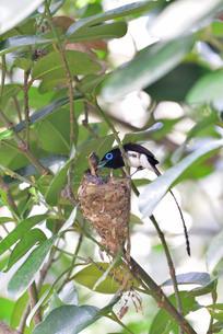宮古島/繁殖の季節の写真素材 [FYI02978836]