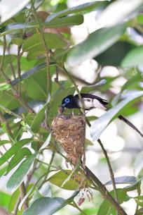 宮古島/繁殖の季節の写真素材 [FYI02978837]