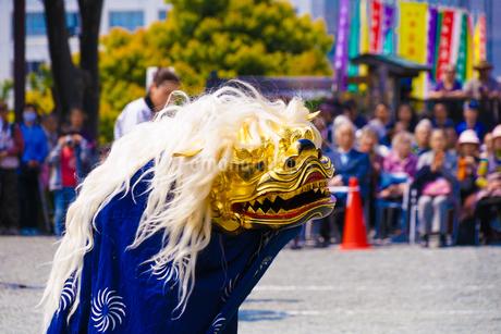 獅子舞のイメージ(日本文化)の写真素材 [FYI02978877]