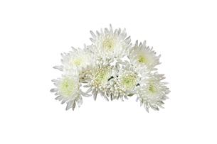 菊の花束の写真素材 [FYI02979230]