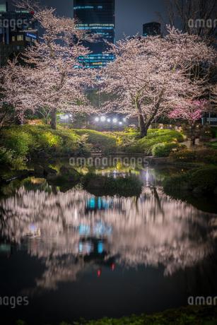 毛利庭園の夜桜(六本木)の写真素材 [FYI02979315]