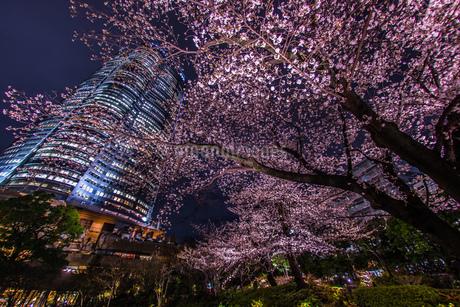 夜桜と六本木ヒルズ(毛利庭園)の写真素材 [FYI02979322]