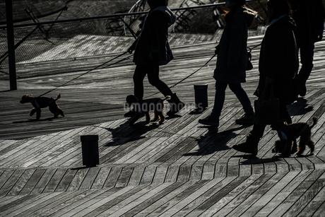 大さん橋のウッドデッキと人々のシルエットの写真素材 [FYI02979412]
