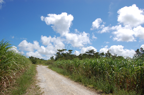 快晴の空と田舎の一本道の写真素材 [FYI02979499]