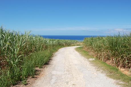 快晴の空と海へ続く田舎の一本道の写真素材 [FYI02979505]