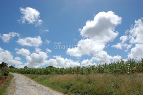 快晴の空と田舎の一本道の写真素材 [FYI02979508]