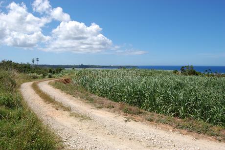 快晴の空と海へ続く田舎の一本道の写真素材 [FYI02979511]