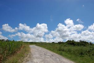 快晴の空と海へ続く田舎の一本道の写真素材 [FYI02979514]