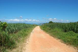 快晴の空と海へ続く田舎の一本道の写真素材 [FYI02979516]