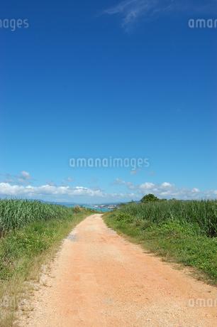 快晴の空と海へ続く田舎の一本道の写真素材 [FYI02979518]
