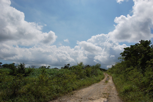 快晴の空と田舎の一本道の写真素材 [FYI02979528]