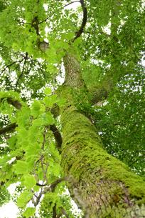 苔むした木の写真素材 [FYI02979799]