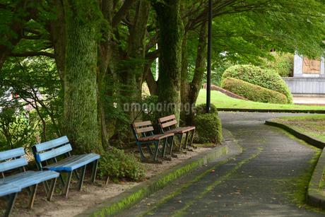 公園ベンチの写真素材 [FYI02979800]