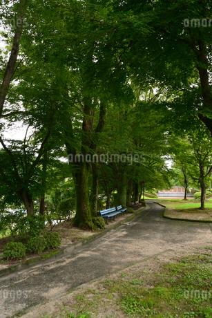 公園ベンチの写真素材 [FYI02979801]