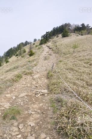 笹原に続く道の写真素材 [FYI02979809]