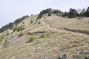 笹原に続く道の写真素材 [FYI02979810]