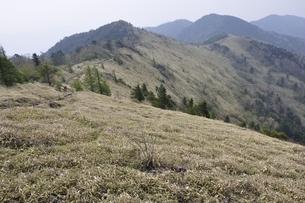 大菩薩嶺 笹原の尾根の写真素材 [FYI02979814]