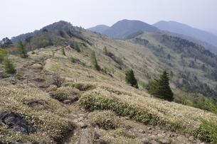 大菩薩嶺 笹原の尾根の写真素材 [FYI02979819]