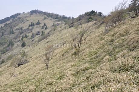 大菩薩嶺 笹原の尾根の写真素材 [FYI02979821]