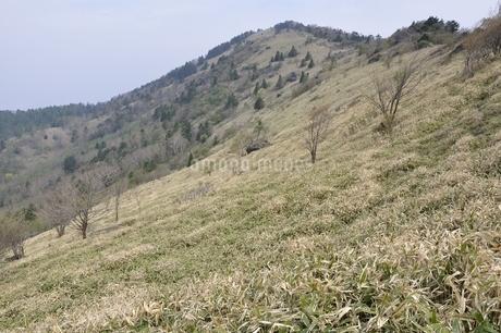 大菩薩嶺 笹原の尾根の写真素材 [FYI02979822]